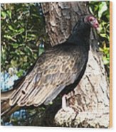 Turkey Buzzard Wood Print