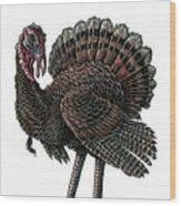 Turkey Wood Print