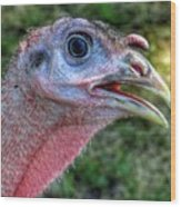 Turkey Named Thanksgiving Wood Print