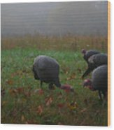 Turkey On A Foggy Morning Wood Print