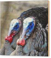Turkey Prowl Closeup Wood Print