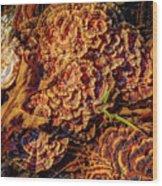 Turkey Tail Mushrooms  Wood Print