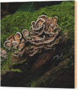 Turkey Tail Wood Print