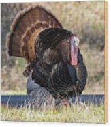 Turkey Tom Struts Wood Print