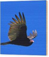 Turkey Vulture - 2 Wood Print