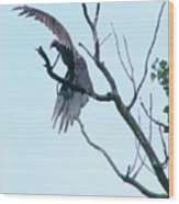 Turkey Vulture Drying Wings After Rain     Indiana Summer Wood Print