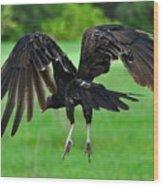 Turkey Vulture In Flight Wood Print