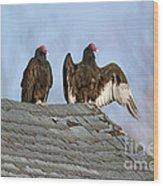 Turkey Vultures On Roof Wood Print