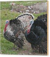 Turkeys In The Yard At Laguna Guerrero Wood Print