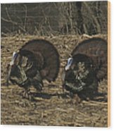 Turkeystrutin Wood Print