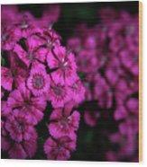 Turkish Carnation 5140 H_2 Wood Print