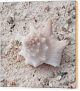 Turks And Caicos Shell Wood Print