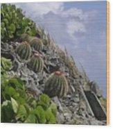 Turks Cap Cactus Wood Print