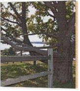 Turn At The Tree Wood Print