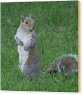 Turning Squirrel Wood Print