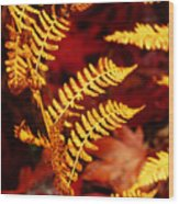 Turning To Autumn Wood Print