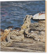 Turnstones At The Harbour Wood Print