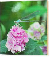 Turquiose Dragonfly  And Hydrangea Wood Print