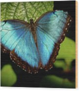 Turquoise Beauty Wood Print