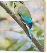 Turquoise-browed Motmot Wood Print