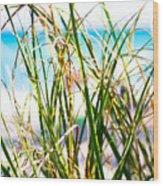 Turquoise Splender Wood Print