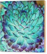 Turquoise Succulent 2 Wood Print
