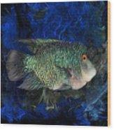 Turquoise Texas Cichlid  Wood Print