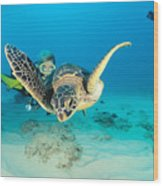 Turtle And Diver Wood Print