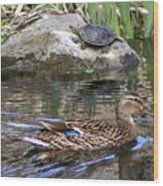 Turtle And Duck Wood Print