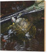 Turtle And The Stick Wood Print
