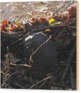 Turtle At Deer Creek Wood Print