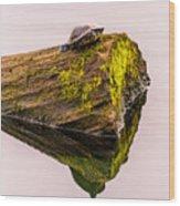 Turtle Basking Wood Print