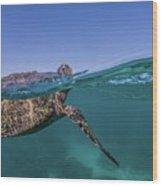 Turtle Breath Wood Print