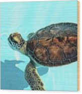 Turtle Close-up  Wood Print