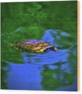 Turtle Coming Up For Air 003 Wood Print