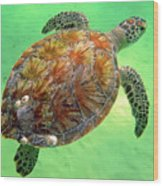 Turtle Day In Titusville,florida Wood Print