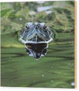 Turtle Head Wood Print