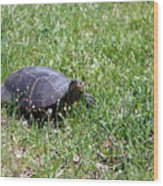 Turtle In The Grass Wood Print