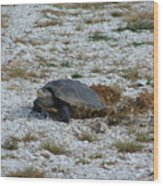 Turtle Laying Eggs Wood Print