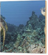 Turtle Panorama Wood Print by Dave Fleetham - Printscapes