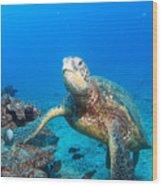 Turtle Portrait Wood Print