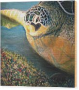 Turtle Run Wood Print