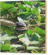 Turtle Town Wood Print
