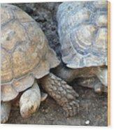Turtle Turtle Wood Print
