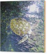 Turtle Water Glide Wood Print
