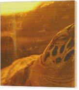 Turtled Wood Print