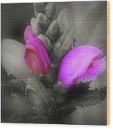 Turtlehead Flower Wood Print