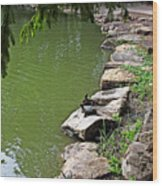 Turtles 7832 Wood Print