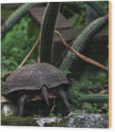Turtles Butt Wood Print