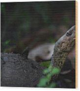 Turtle's Neck 1 Wood Print